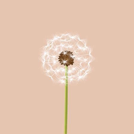 Dandelion - vector illustration