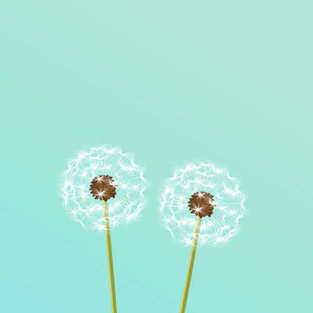 Dandelion - vector illustration