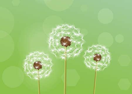 pistil: Dandelion. vector illustration