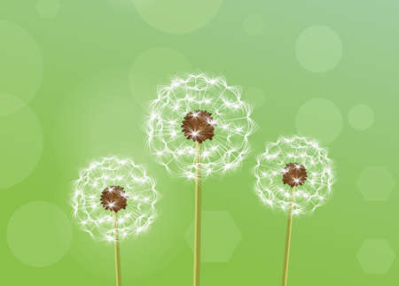 Dandelion. vector illustration