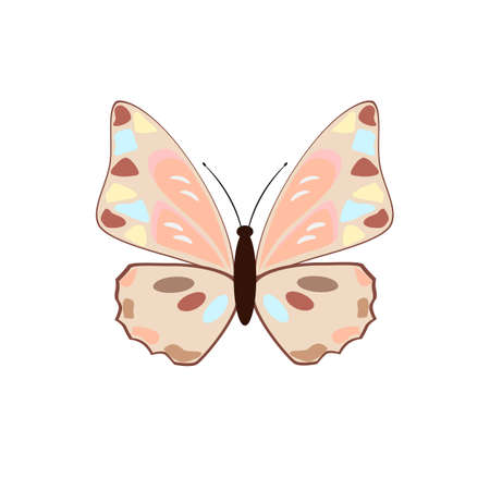 butterfly isolated: butterfly on a white background Illustration