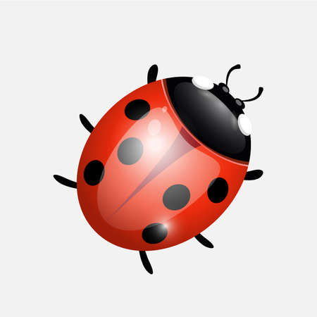 ladybug on a white background. Design vector and illustration design