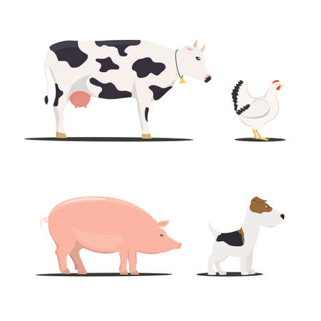 farm chicken, pork and cow, dog - vector illustrations.