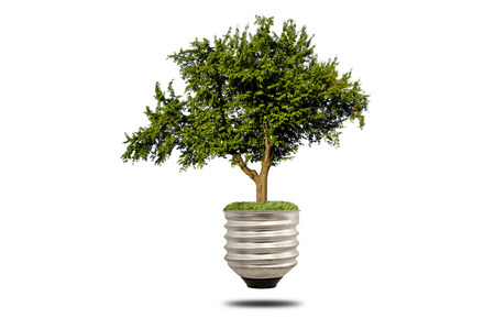 green tree growing out of a bulb, bulb energy concept photo