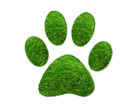 Green grass animal footprint on white background photo