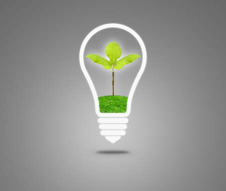 fertilize: Light Bulb with sprout inside. Light Bulb with soil and green plant sprout inside