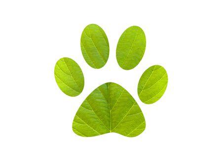 green footprint: Footprint in leaves. Green foot print with textured leaves. Green foot print dog
