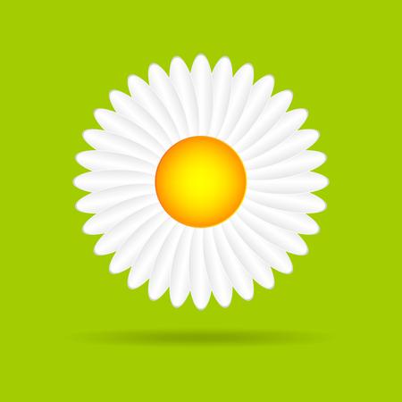 daisy vector: Abstract camomile on a green background. Flat daisy - vector illustration. Illustration
