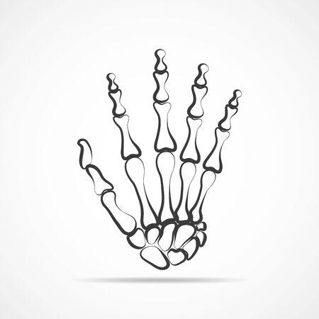 Knochen Beider Hände Auf Hellem Hintergrund. Skeleton Hand. Vektor ...