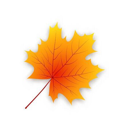 Jesienny liść klonowy na białym tle na białym tle. Ilustracja wektorowa. Ilustracje wektorowe
