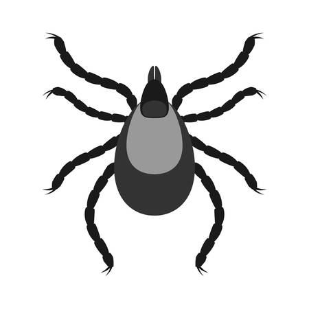 Mite parasites. Insect icon isolated. Black silhouette of mite. Vector illustration. Mite icon in flat design