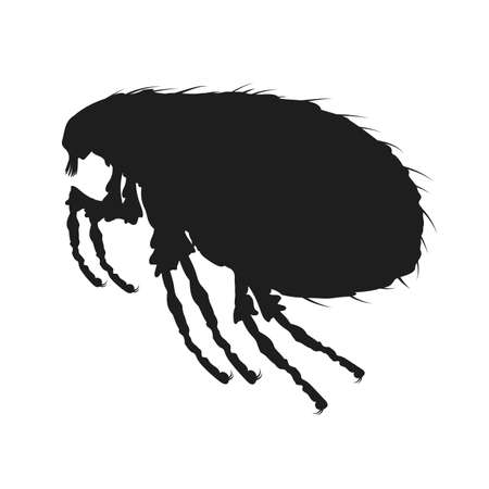 Louse icon. Insect icon isolated. Black silhouette of louse. Vector illustration. Louse icon in flat design 向量圖像