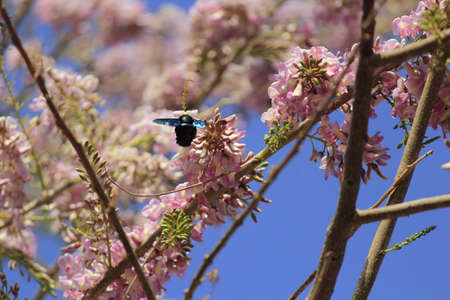 flit: bumble bee with small wing and flower