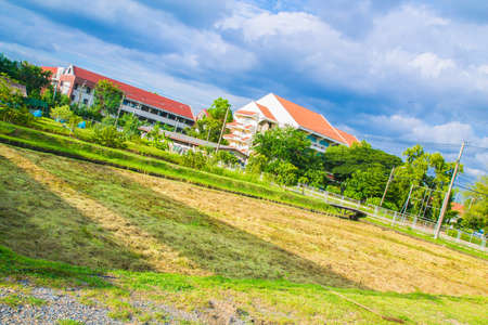 paddy field: paddy field in the town Stock Photo