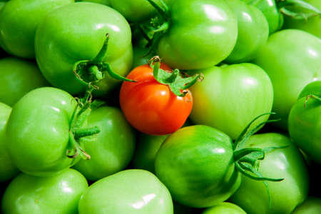 original ecological: Green and red tomatoes background