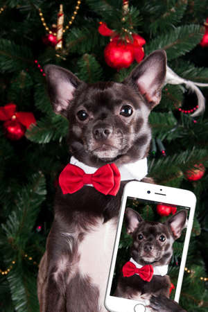 Dog make selfie Stock Photo