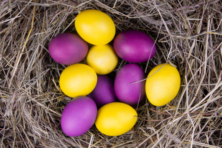 Yellow and purple eggs in a nest top view. Concept easter. Banque d'images