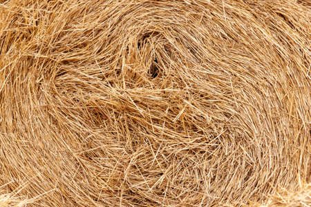 A tightly rolled stack of golden hay in late summer. Agriculture concept