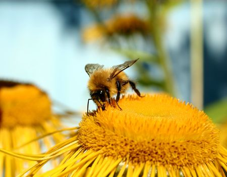 Bumble-bee. photo