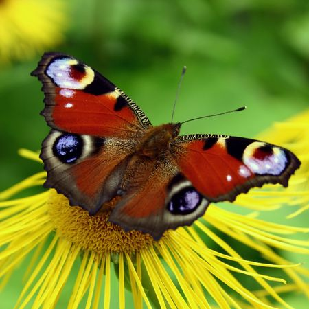 Butterfly Stock Photo - 352722