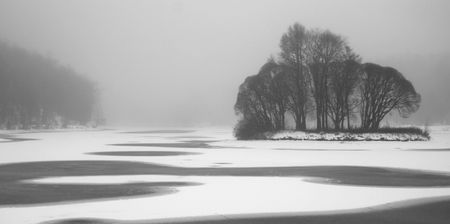 Fog in the park. Winter.