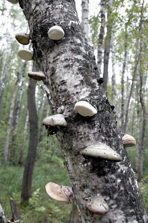 Mushroom on a tree. photo