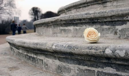 mournful: Lost flower. Rose