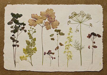 Herbarium photo