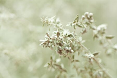 Twig of wormwood on a green natural background.  photo