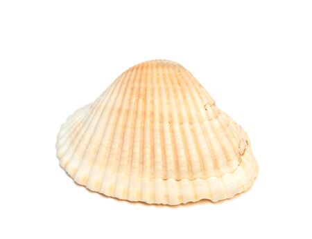 Sea shell isolated on the white background. photo