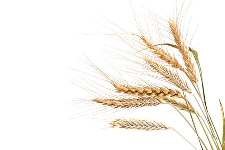 Wheat ears on a light background.
