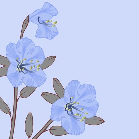 azal�e: Fleur de vecteur de th� du Labrador (Ledum) sur fond bleu.
