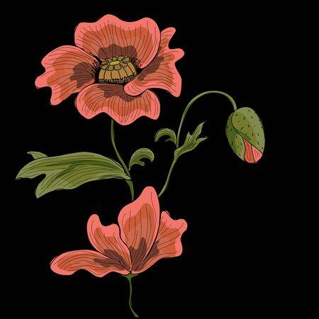 Vector hand drawn poppy on a black backgroud. Stock Vector - 9428002