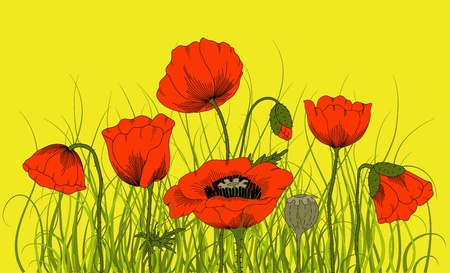 poppy field:  hand drawn fantasy poppies and grass.
