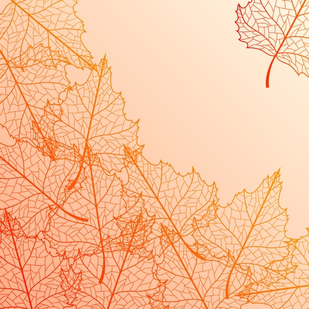 Vector autumn background with birch multicolor leaves. Vector
