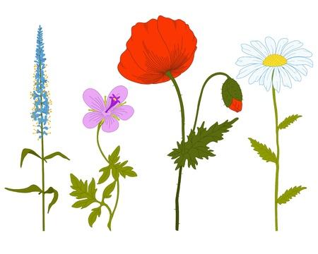 poppy field: Vector de flores del campo de fantas�a sobre un fondo blanco.