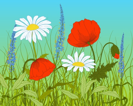 poppies:  field with fantasy flowers and grass. Illustration