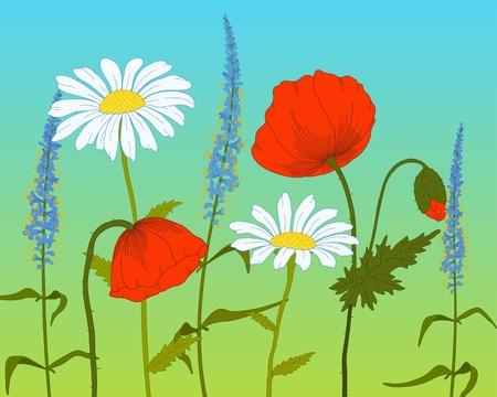 flower fields:  field fantasy flowers on a gradient background. Illustration