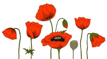 hand drawn fantasy poppies on white. Ilustrace