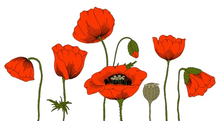 poppies:  hand drawn fantasy poppies on white. Illustration
