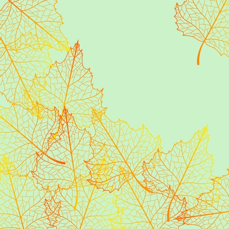 Autumn background with birch multicolor leaves. Vector