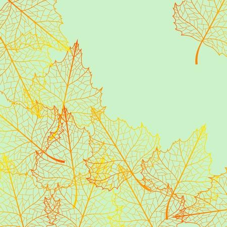 Jesieni w tle z kolorowych liÅ›ci brzozy.