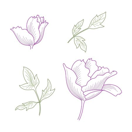 Hand drawn fantasy peony and leaves. Stock Vector - 10491221