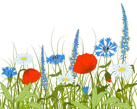 poppies: Vector field with fantasy flowers and grass.  Illustration