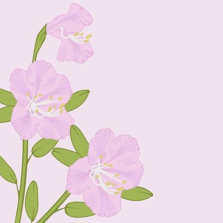 azal�e: Vecteur de fleur de th� du Labrador (Ledum) sur fond rose. Illustration
