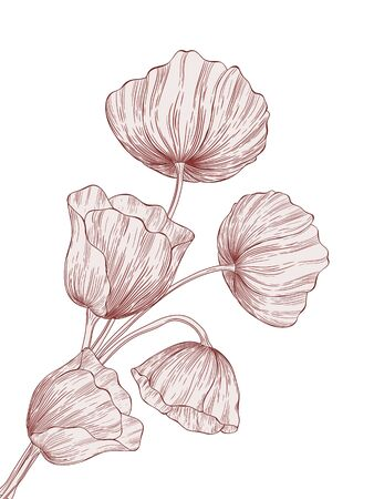 Vector illustration with blossoming poppies. Vector