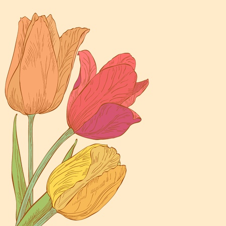 Vector design with tulips for greeting card. Vector