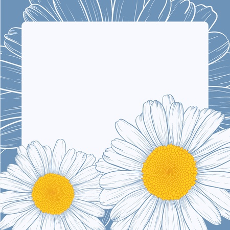Vector illustration with daisies for greeting card.  Vector
