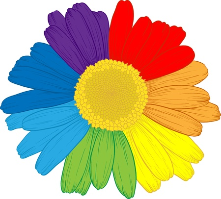 Vector colored daisy with rainbows petals on white. Illustration