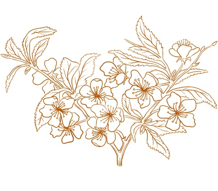 Vector cherry blossom in vintage engraving style.